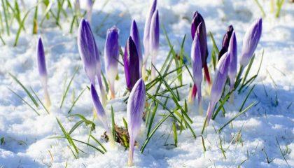 Пердалез – борьба зимы с весной