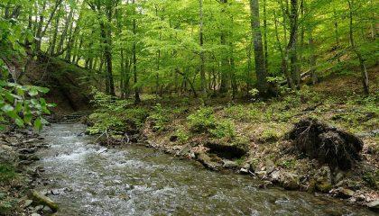Река Кача- главный источник воды для Бахчисарайского района и Ялты